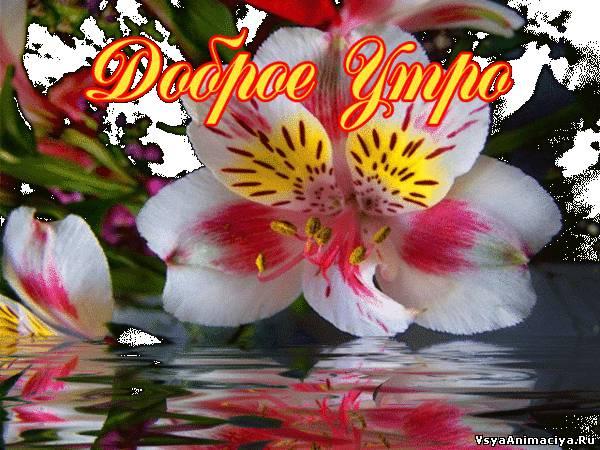 http://vsyaanimaciya.ru/_ph/169/2/591680801.jpg