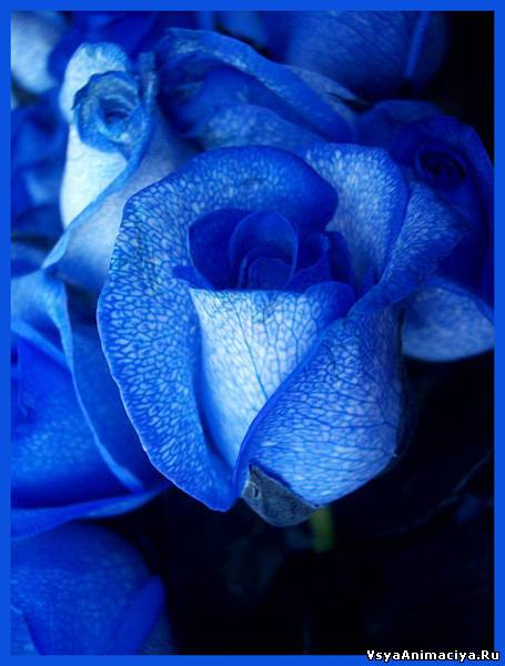 Картинки синие на заставку на рабочий стол - 8f87d