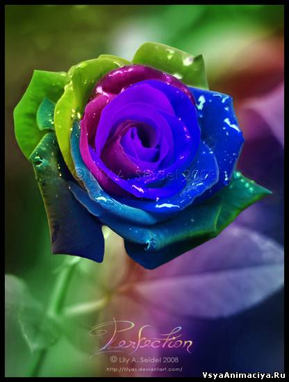 Картинки синие розы с днем рождения - da47