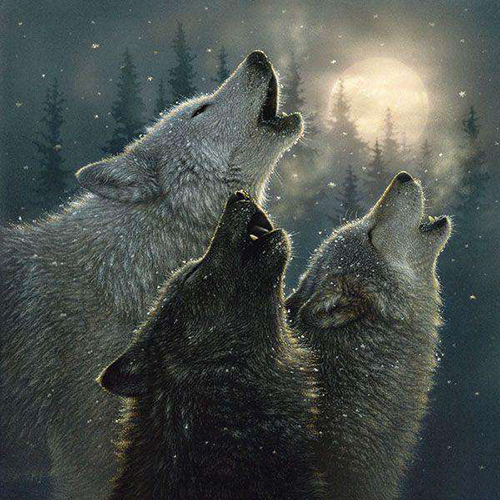 Картинки волки - ef43e